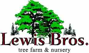 Lewis Brothers NEW